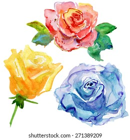 color roses collection, vector illustration.