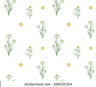 color seamless pattern of summer chamomile flowers and herbs vector illustration on white background
