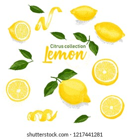 Color set of hand drawn tropical citrus fruit. Lemon. Ink sketch style. Good idea for templates menu, recipes, greeting cards. Vector illustration