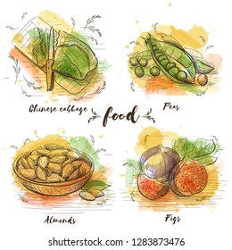 Color Set of vegetarian food in sketch graphic. Vector watercolor images of food. Healthy food, chinese cabbage, peas, almond and figs.