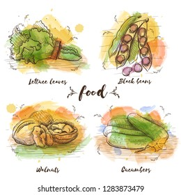 Color Set of vegetarian food in sketch graphic. Vector watercolor images of food. Healthy food, lettuce leaves, black beans, walnuts and cucumbers.