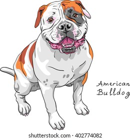 Color sketch of the dog American Bulldog breed.