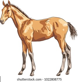 A color sketch of a foal.