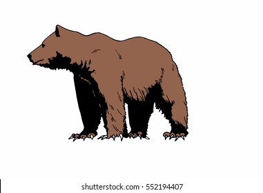 Color vector illustration of bear Grizzly isolated on white background