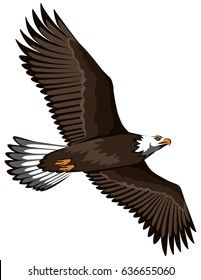 color vector illustration of a soaring bird of a Eagle with spread wings