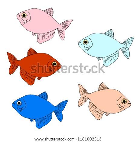 Colored Aquarium Fish Vector Illustration Stock Vector Royalty Free