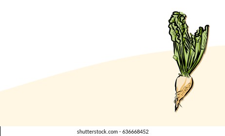 Colored beet sugar Vector Card, Fresh Food Collection, Handdrawn Clean Outline Sketch