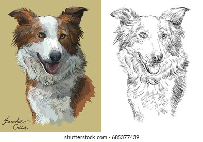 Colored Border collie portrait on beige background and and black color on white background vector hand drawing illustration