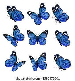 Colored butterflies. Flying beautiful insects wedding butterfly with decorated wings vector