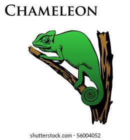 colored chameleon vector illustration