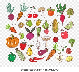 Colored doodle fruits and vegetables. Vector sketch illustration of healthy food.