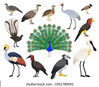 Colored exotic bird set. Cartoon beautiful flying characters with beak and feathers, vector illustration of birds with cute coloring plumage isolated on white background