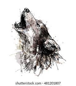 Colored hand drawing of a howling wolf. Vector illustration
