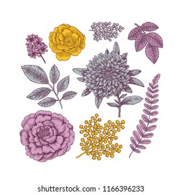 Colored hand drawn herb and flower set. Vintage engraved style flowers. Vector illustration