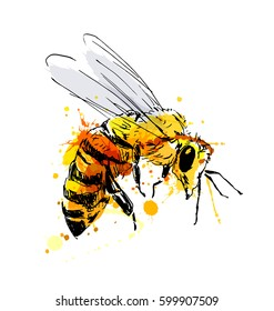Colored hand sketch flying bee. Vector illustration