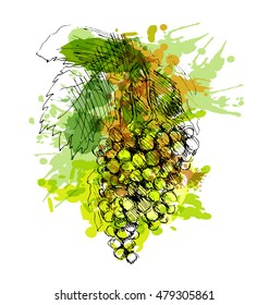 Colored hand sketch grapes. Vector illustration