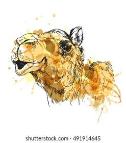Colored hand sketch of the head of a camel. Vector illustration