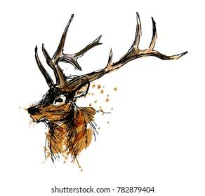 Colored hand sketch head deer. Vector illustration