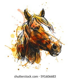 Colored Hand Sketch Horse Head Vector Illustration