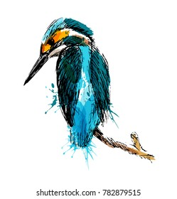 Colored hand sketch of kingfisher. Vector illustration