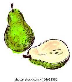 Colored hand sketch pears. Vector illustration
