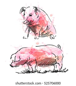 Colored hand sketch of a pig. Vector illustration