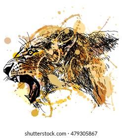 Colored hand sketch roaring lioness head. Vector illustration