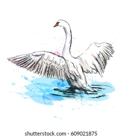 Colored hand sketch swan taking off. Vector illustration