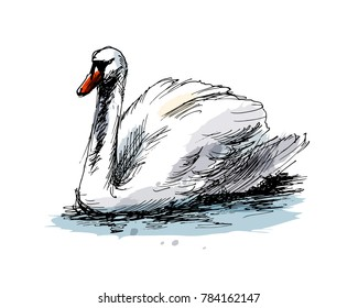 Colored hand sketch swan. Vector illustration