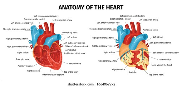 Colored healthy and unhealthy heart with labeled parts flat set isolated on white background vector illustration