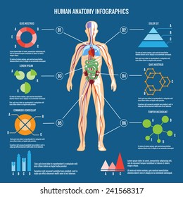 Colored Human Body Anatomy Infographic Design on Blue Green Background.