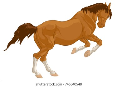 Colored illustration of a galloping steed preparing to jump, laid his ears back. Running red horse with white stockings on legs and brown mane. Vector clip art and design element for equestrian club