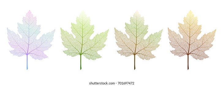 Colored maple leavest . Vector illustration