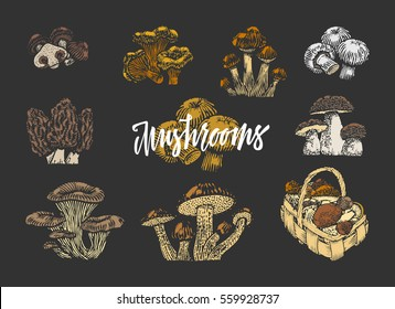 Colored mushroom elements set of different kinds in sketch style on dark background isolated vector illustration