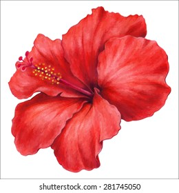 colored pencils hand drawing  of beautiful  hibiscus flower