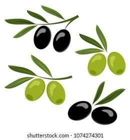 Colored set of black and green olives. Vector illustration
