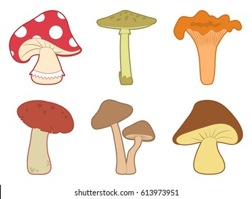 Colored set of different mushrooms isolated on white background. Vector illustration