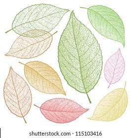 Colored vector leaf skeletons.