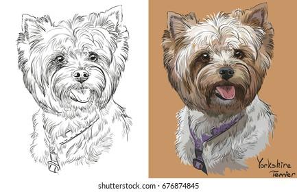 Illustration Yorkshire Terrier Images Stock Photos Vectors