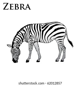 colored zebra eating vector illustration