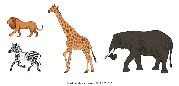Colorful african wild animals set with lion zebra giraffe and elephant on white background isolated vector illustration