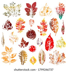 Colorful autumn leaves imprints set isolated on white background. Vector illustration