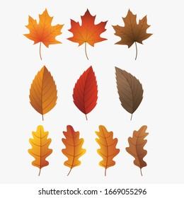 Colorful autumn leaves set, isolated on white background. Simple cartoon flat style, vector.