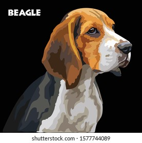 Colorful Beagle vector drawing portrait. Isolated vector illustration on black background. Vector realistic illustration of beagle dog.
