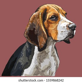 Colorful Beagle vector hand drawing portrait. Isolated vector illustration on maroon background. Vector realistic illustration of beagle dog.