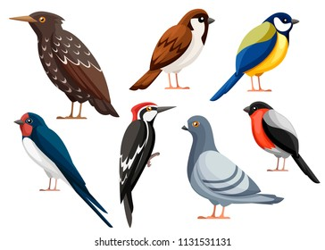 Colorful bird collection. Pigeon, Sparrow, Titmouse, Swallow, Woodpecker, Starling, Bullfinch. Flat birds icon. Vector illustration isolated on white background.