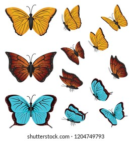 Colorful Butterflies Beautiful Butterfly Various Directions Collection Set