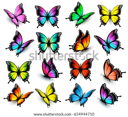 Colorful Butterflies Set Vector Stock Vector Royalty Free