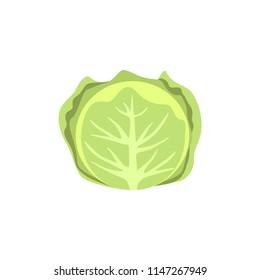 Colorful cabbage clipart cartoon. Cabbage vector illustration.