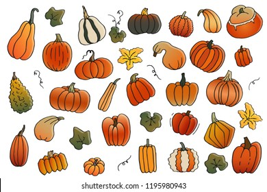 Colorful cartoon contour set of pumpkins with flower and leaves. Templates collection of gradient squash and gourd for harvest, thanksgiving day and halloween hand drawn isolated on white